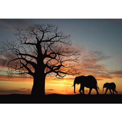 Vlies fotobehang Silhouetten Afrika